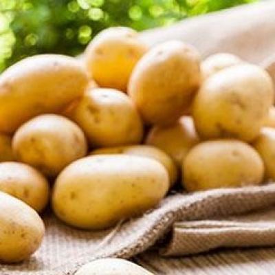 Cơ chế trị nám da từ khoai tây