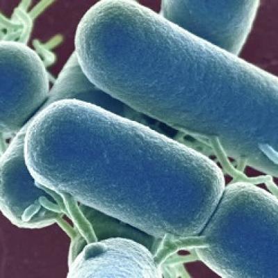 Tác dụng trên da của vi khuẩn lactic trong men sữa chua BeSpo